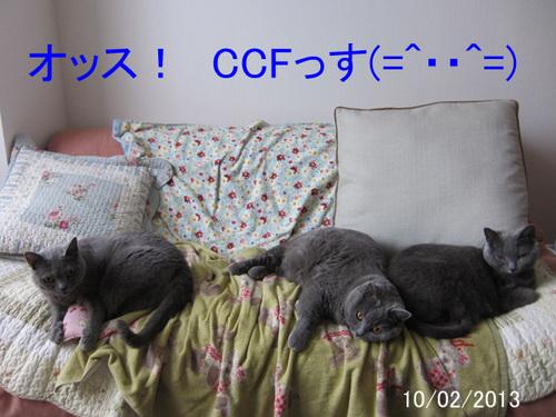 オッスCCF01.jpg